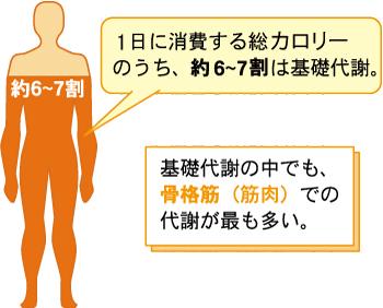 骨格筋量 筋肉量