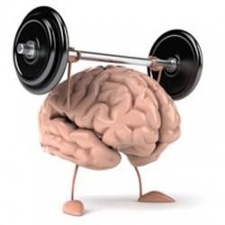 脳みそまで筋肉 脳ミソまで筋肉