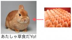 ウサギに卵実験