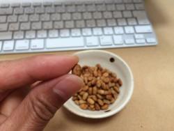プチポリ納豆 乾燥納豆 ドライ納豆