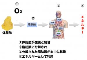 有酸素運動によるエネルギーの流れ