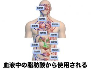 血中脂肪酸