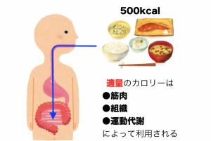 カロリー制限